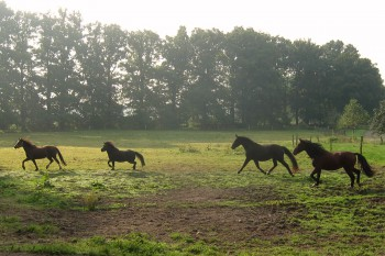 Pferde auf dem Oesenhof