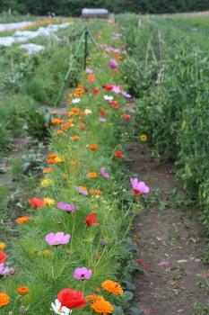 Blumenstreifen