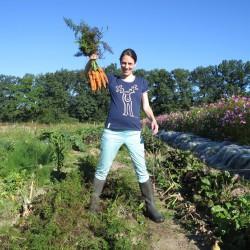 Erfolgreiche Karottenernte - August 2016
