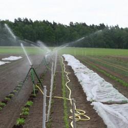 Bewässerung des Kultgemüseackers - Mai 2016