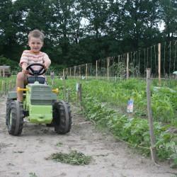 kleiner Traktorfahrer auf dem Kultgemüseacker
