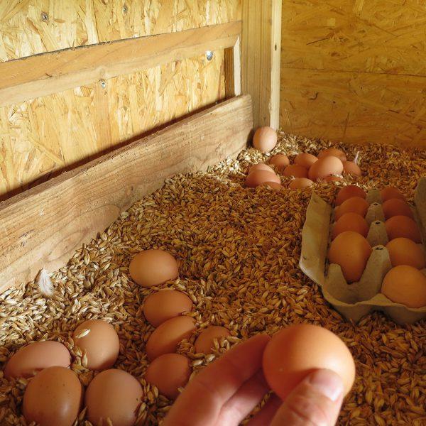 Hühnermobil - Eiersuche