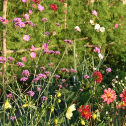 Kultgemüse Blumen