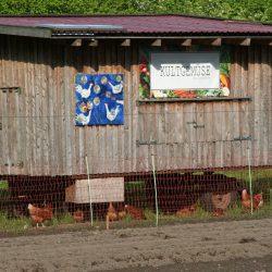 Kultgemüse Hühnermobil